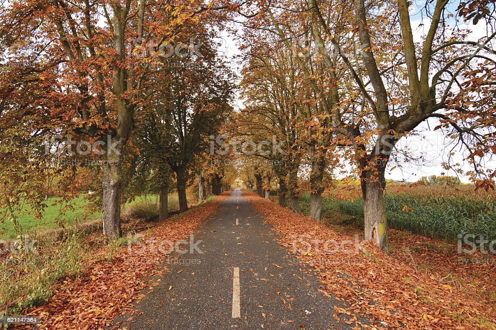 Road with leaves in autumn in Zamora stock photo