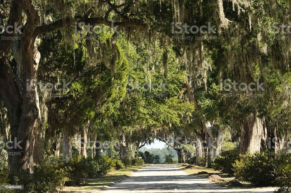 Road with Live Oaks in Savannah stock photo