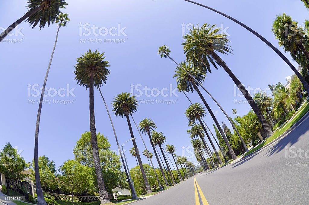 Road with palm trees in Los Angeles County royalty-free stock photo