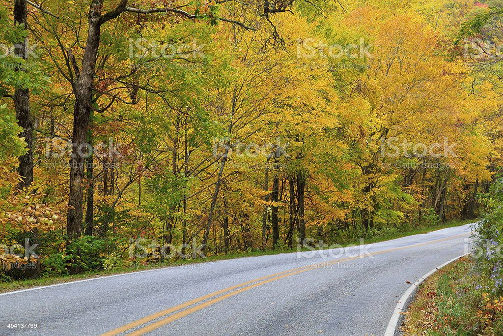 Road with Pretty Yellow Foliage stock photo