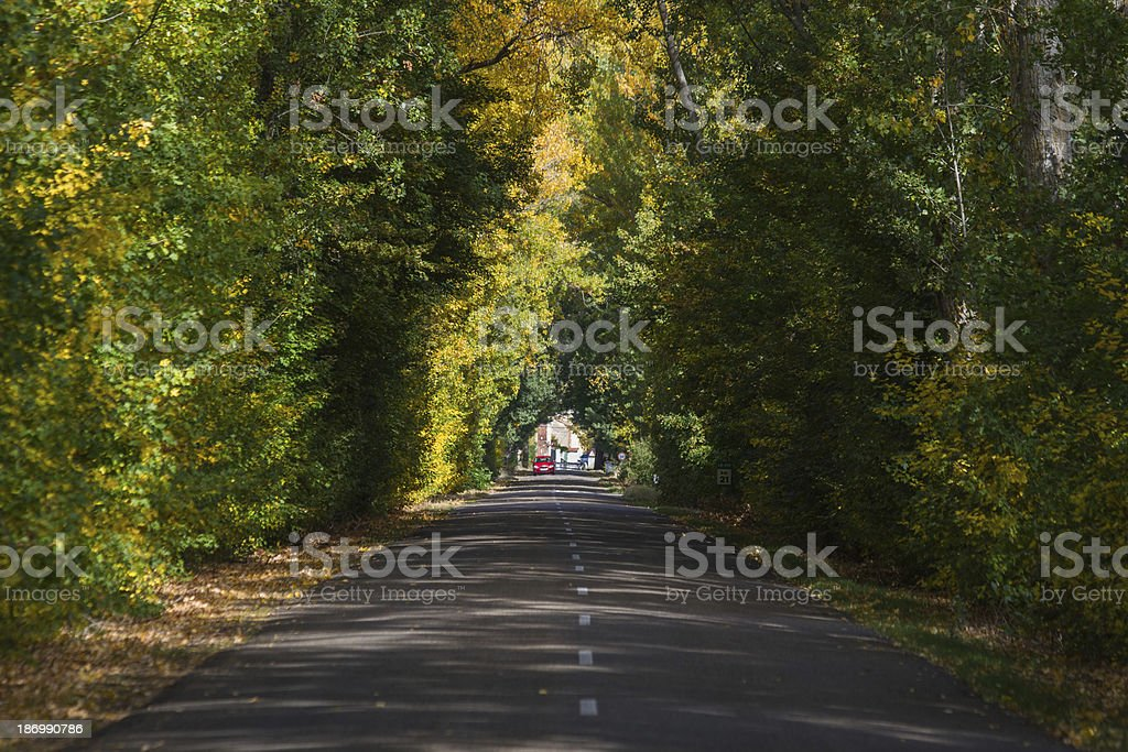 Road with Trees in Autumn and Red Car-  Carretera secundaria stock photo