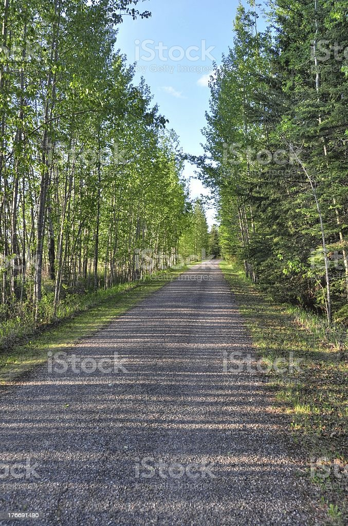 road with trees on each side stock photo