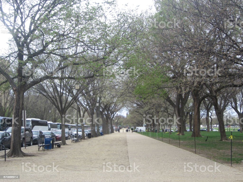 Road with trees stock photo
