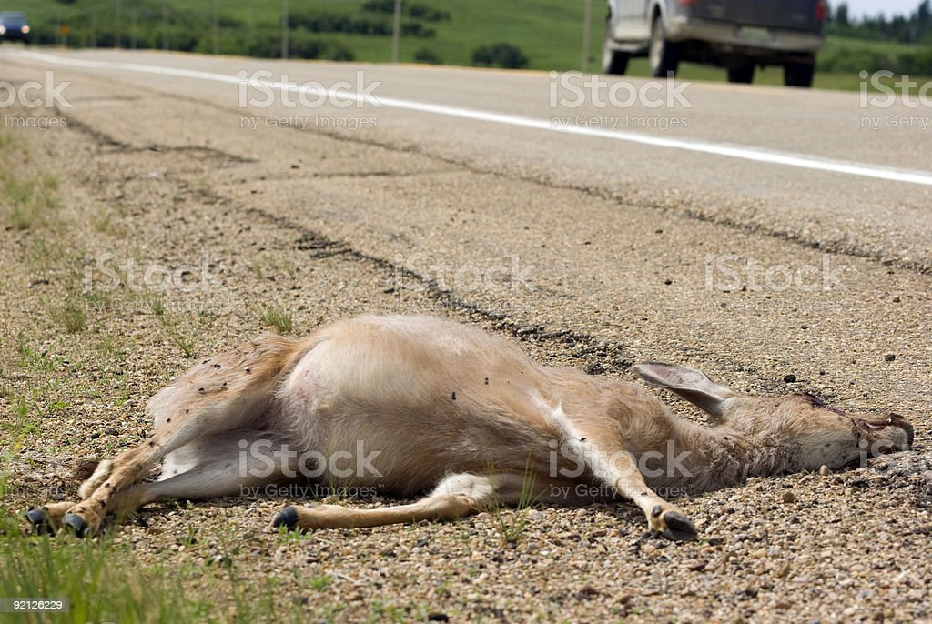 Roadkill & Highway safety stock photo