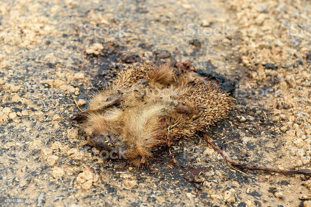 Roadkill (Hedgehog) stock photo