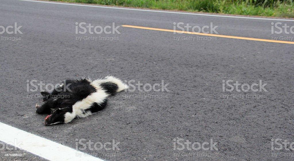 Roadkill Skunk stock photo