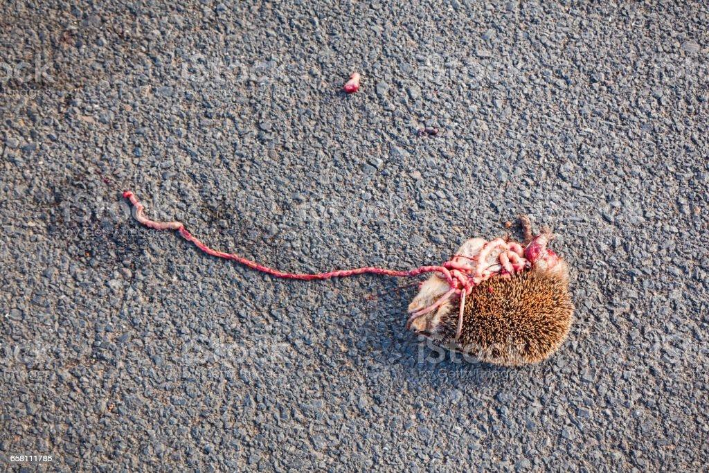 Roadkilled hedgehog stock photo