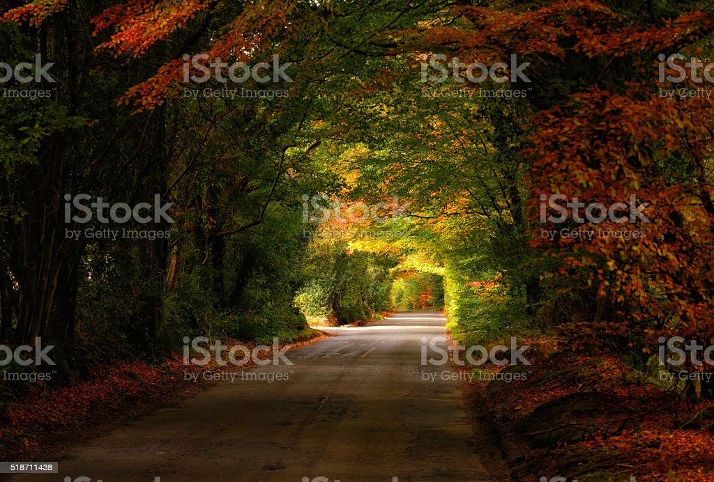 ...Roads of the Fall... stock photo