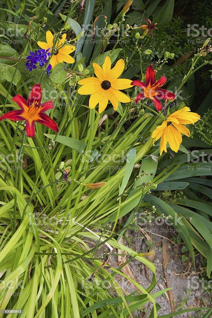 Roadside lilies royalty-free stock photo