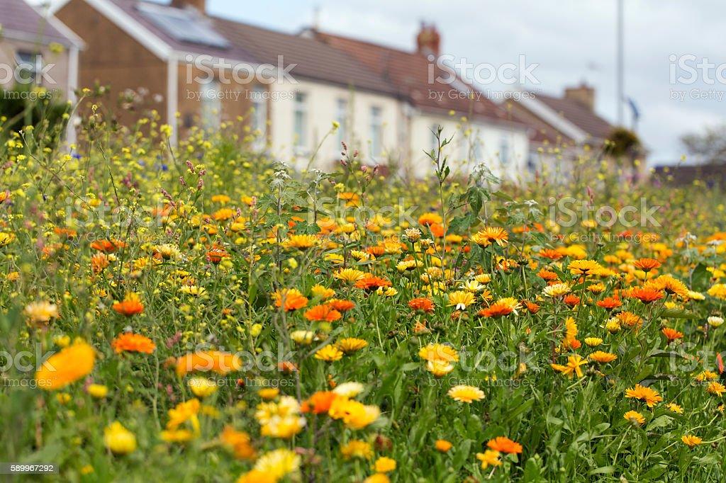 Roadside Marigolds stock photo