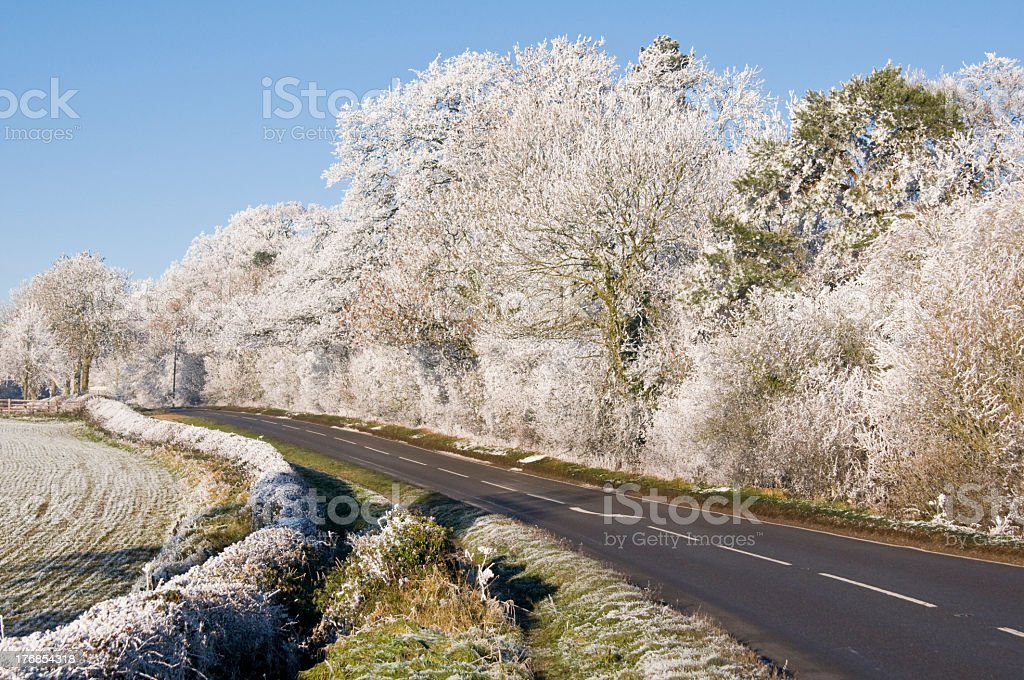 Roadside Trees Covered in Frost stock photo