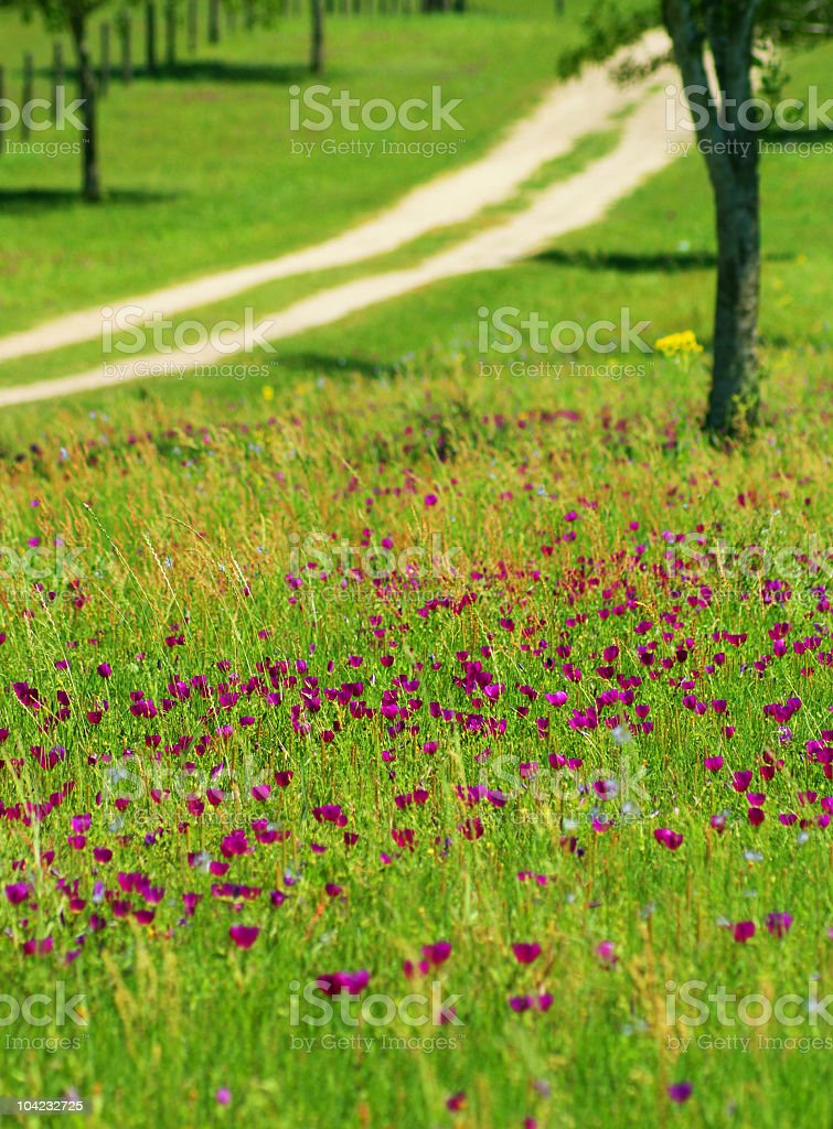 roadside wild flowers stock photo
