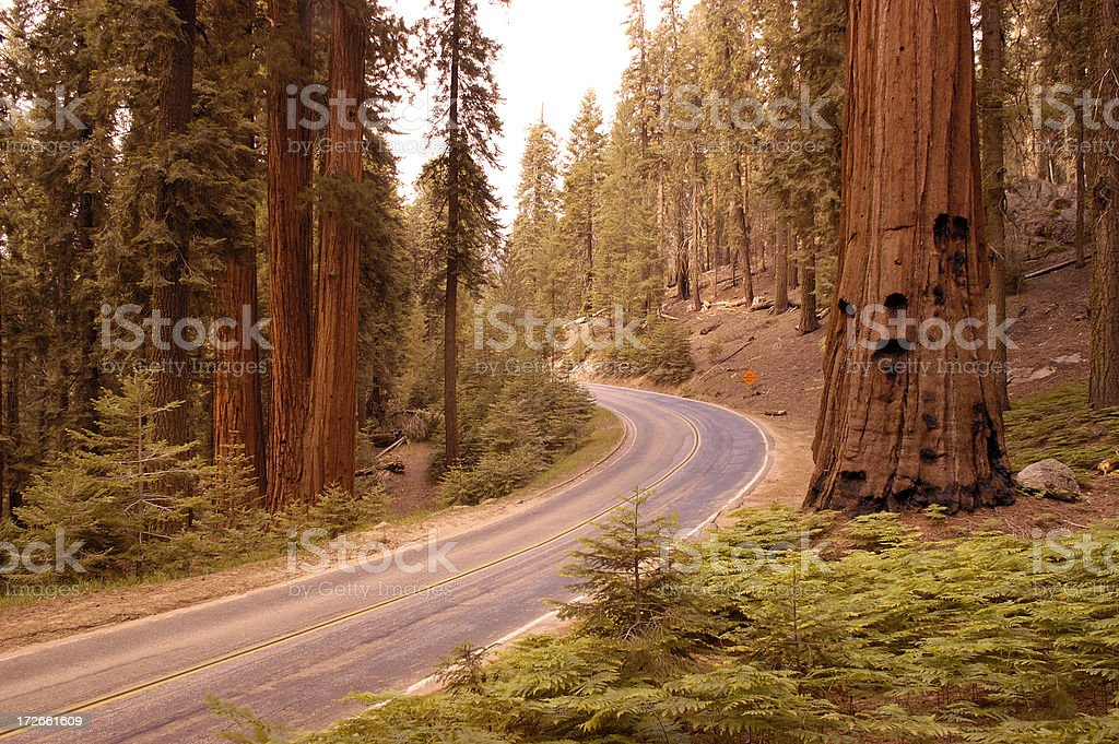 Roadway in Sequoia Park royalty-free stock photo