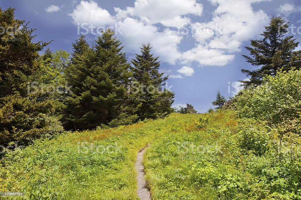 Roan Mountain stock photo
