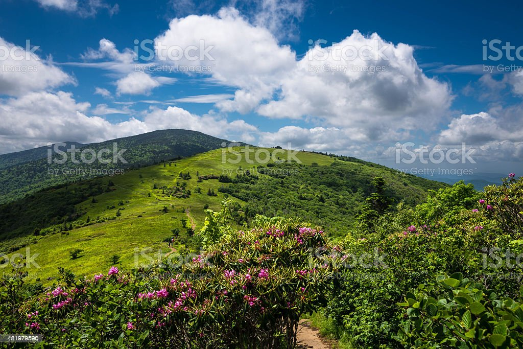 Roan Mountain Spring Rhododenron Blooms 4 stock photo