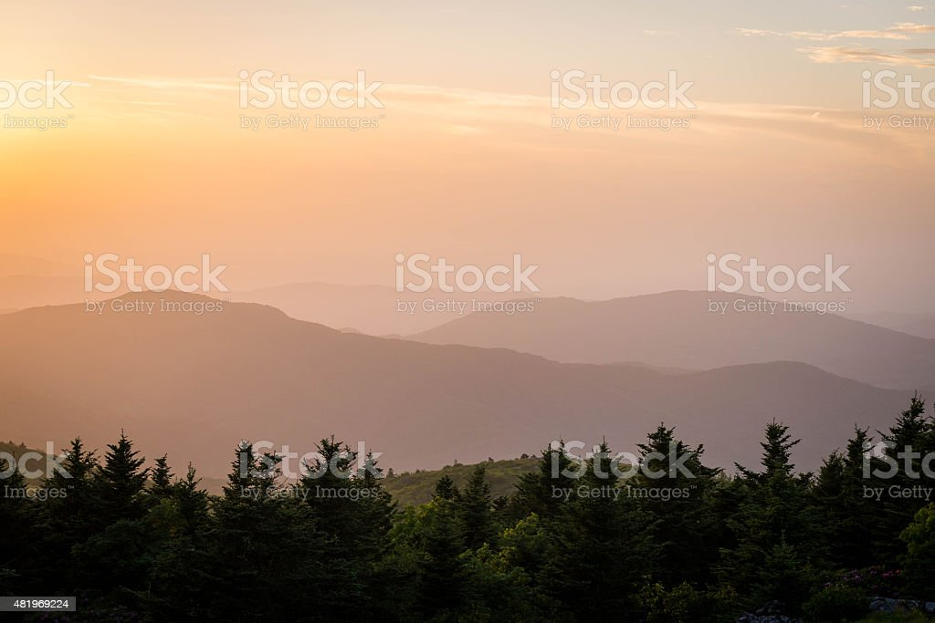 Roan Mountain Spring Rhododenron Blooms 8 stock photo