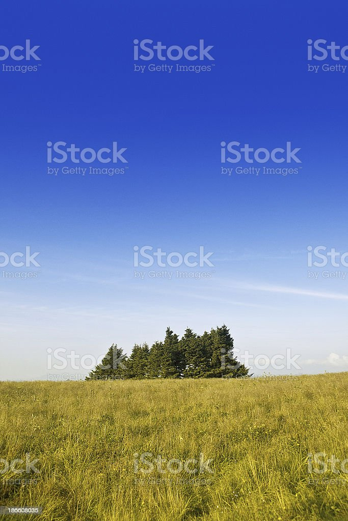 Roan Mountain State Park stock photo