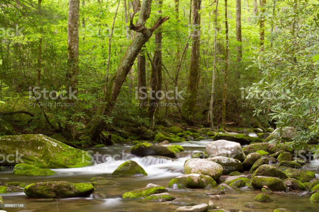 Roaring Forks Motor Trail Details in the Smoky Mountains stock photo