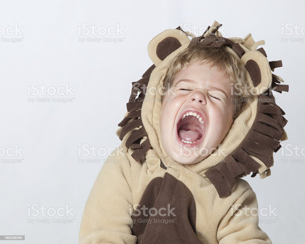 Roaring Laughing Lion royalty-free stock photo