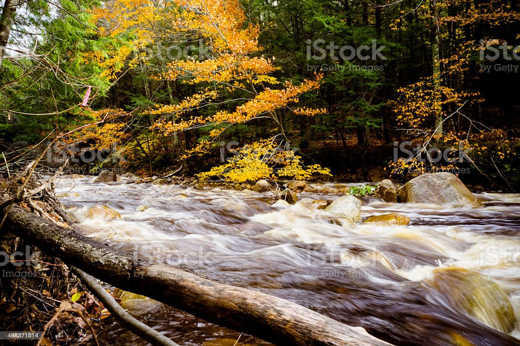 Roaring River surrounded by Fall Foliage stock photo