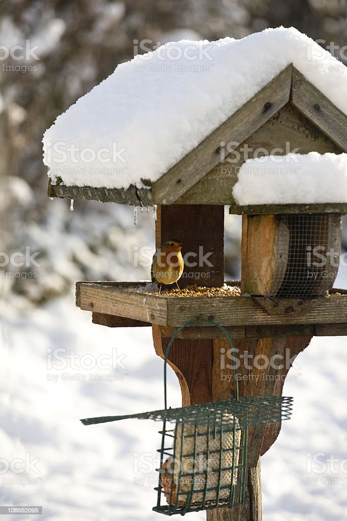 Robin perching on a snow covered bird table stock photo