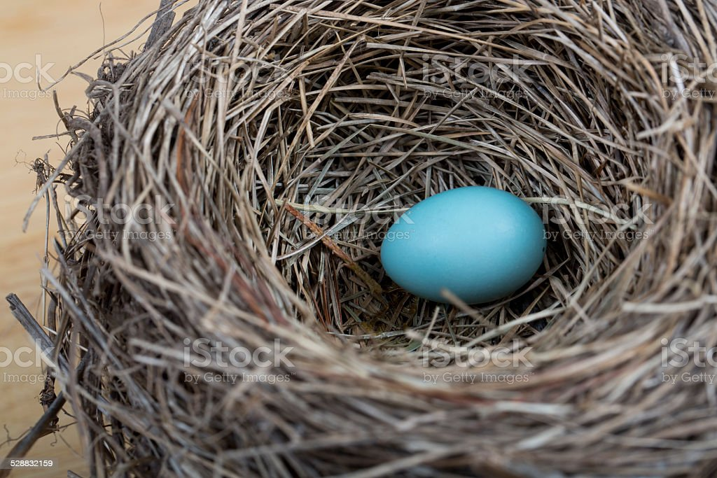 Robin's nest with egg stock photo