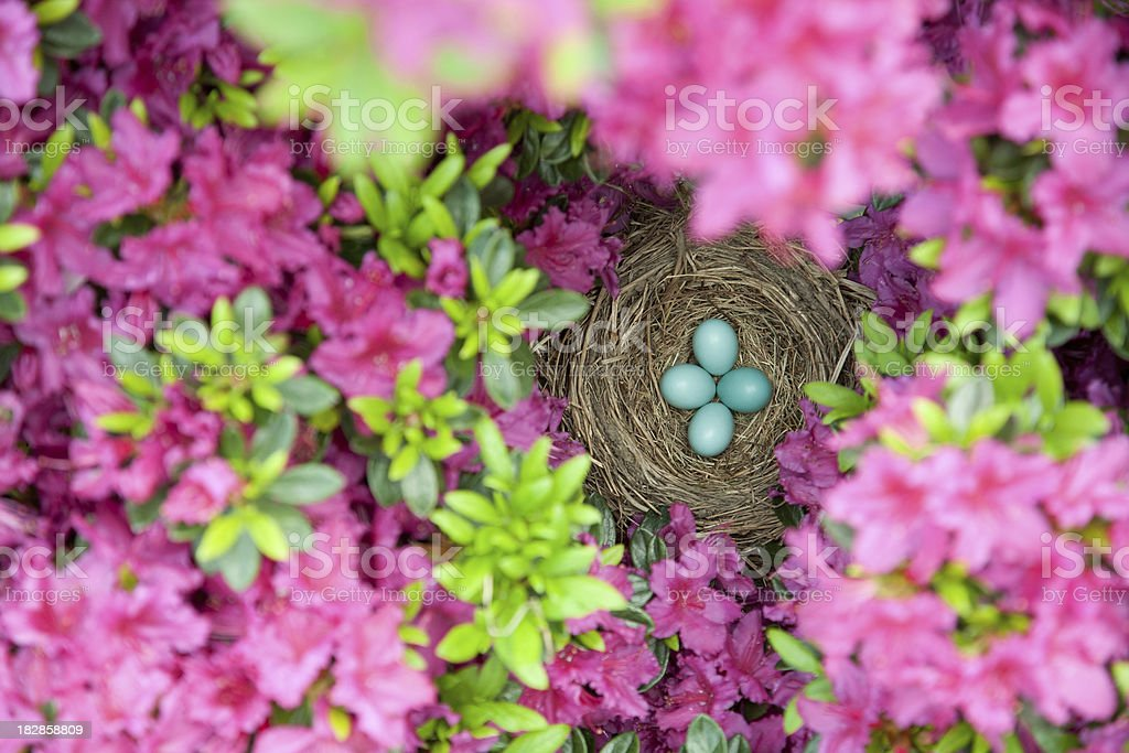 Robins Nest with eggs stock photo