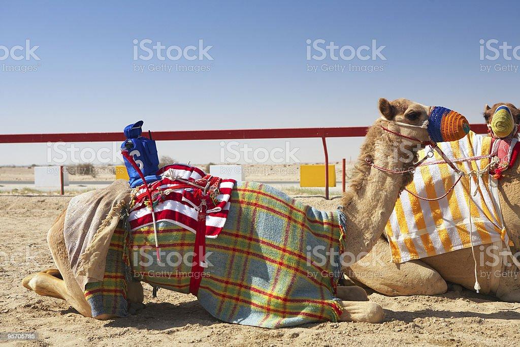 Robot camel racing royalty-free stock photo