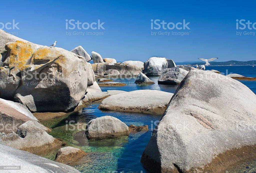 Rocas y gaviotas stock photo