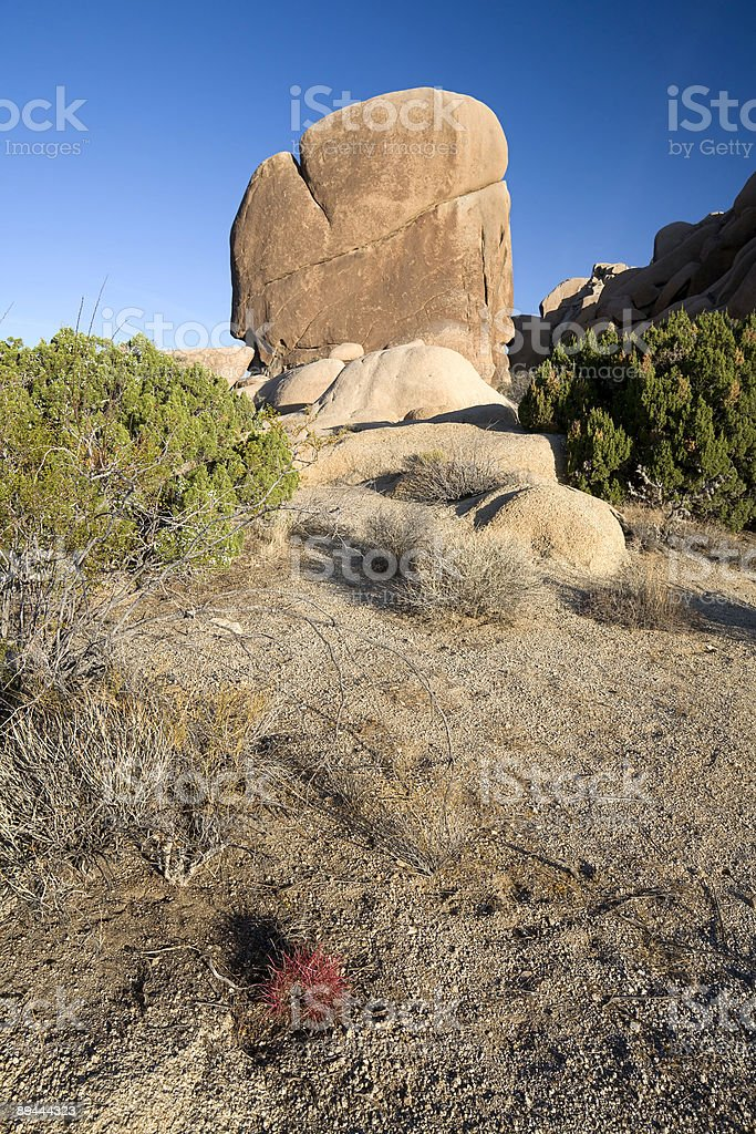 Rock and Cactus royalty-free stock photo
