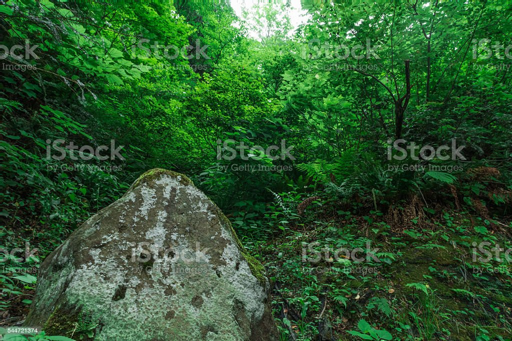 Rock and fresh green stock photo