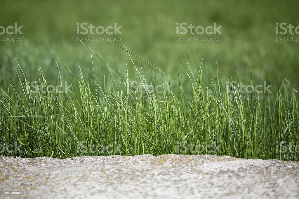 Rock and grass border royalty-free stock photo