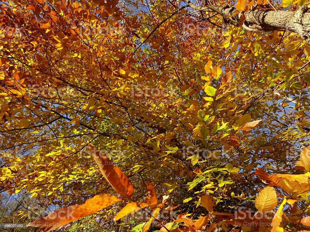Rock Creek Park Autumn stock photo
