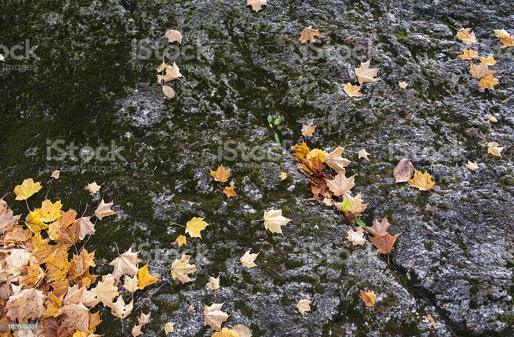 Rock Face and Autumn Leaves Background royalty-free stock photo