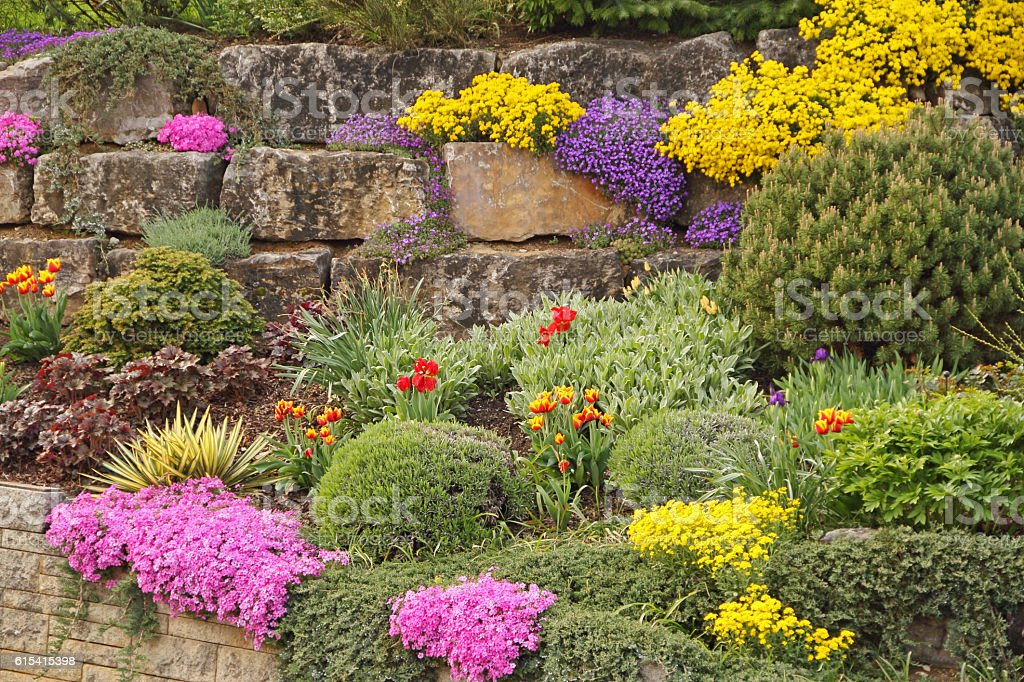 Rock garden In spring stock photo