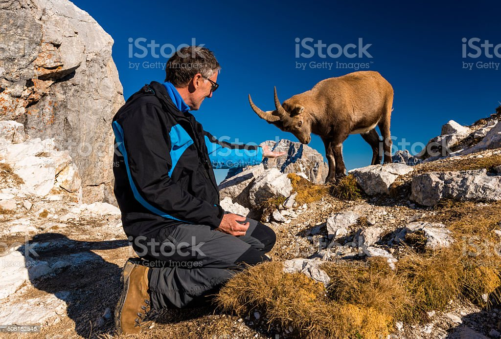 Rock Goat and Alpinist Having Fun in the Mountains stock photo