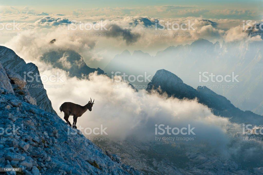 Rock goat on the mountain peak stock photo