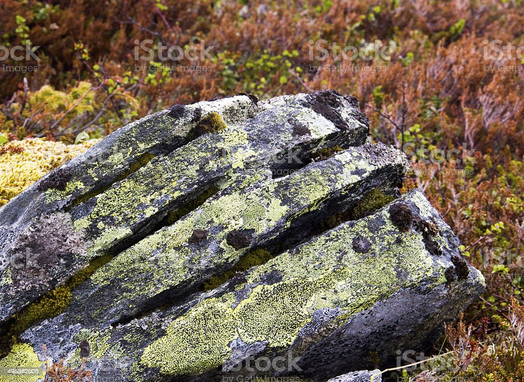 Rock in the woods stock photo