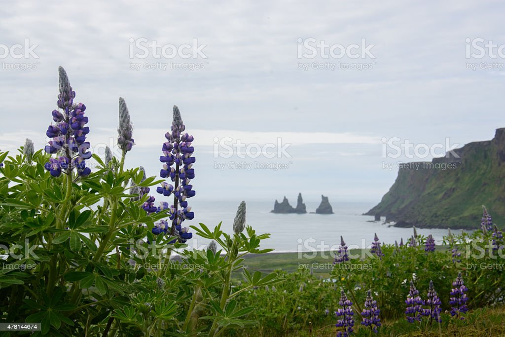 Felsnadel bei Vik mit Lupine royalty-free stock photo