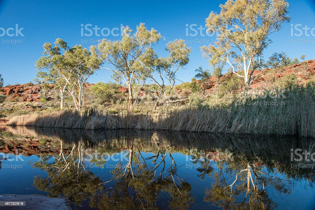 Rock pools and Red Palms, Palm Valley, Finke National Park stock photo