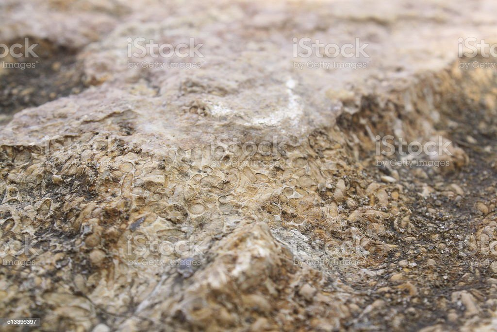 Rock Rice fossil 957 stock photo
