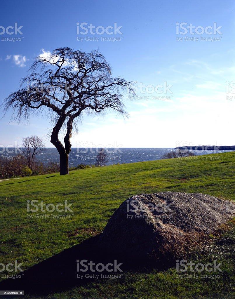 rock, tree, Sound stock photo