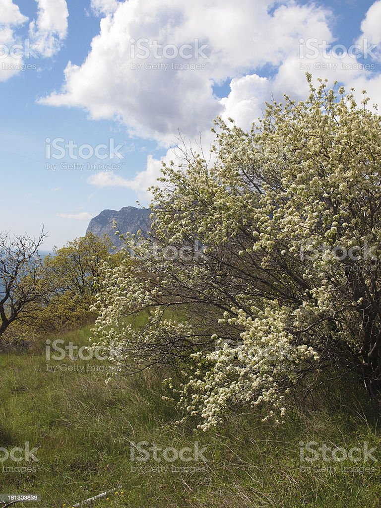 Rock, trees, sea and sky royalty-free stock photo