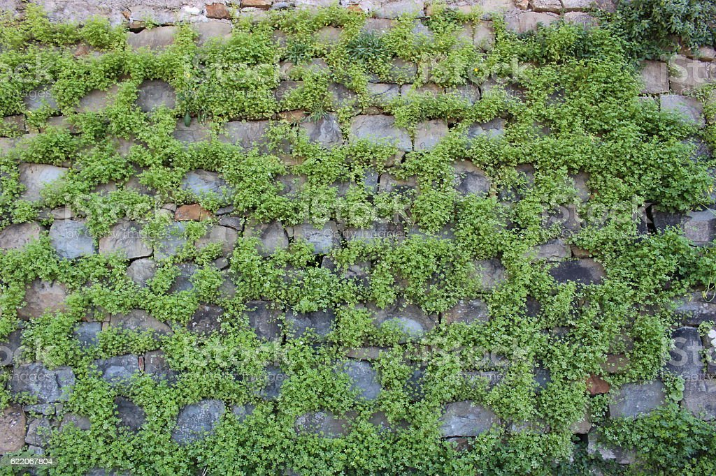 Rock Wall with Plants stock photo