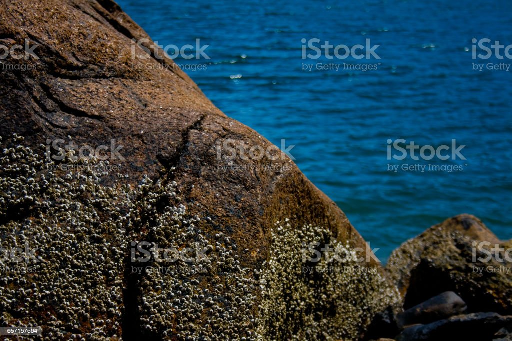 Rock with Barnacles at Ocean stock photo