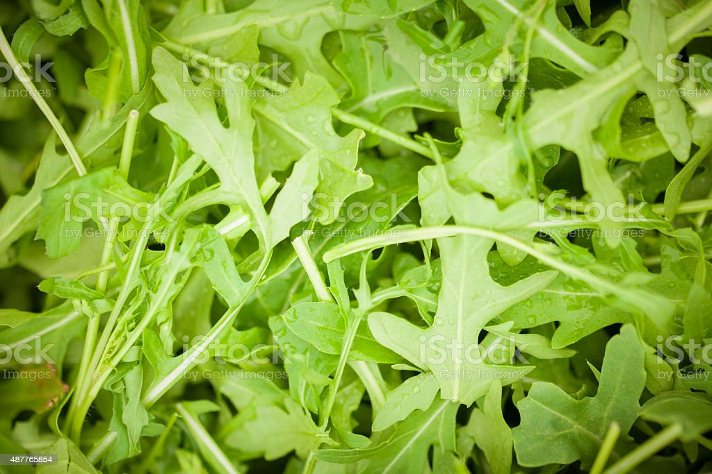 Rocket salad stock photo