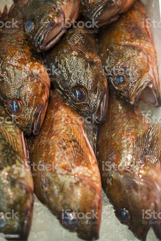 Rockfish at Seafood Market royalty-free stock photo