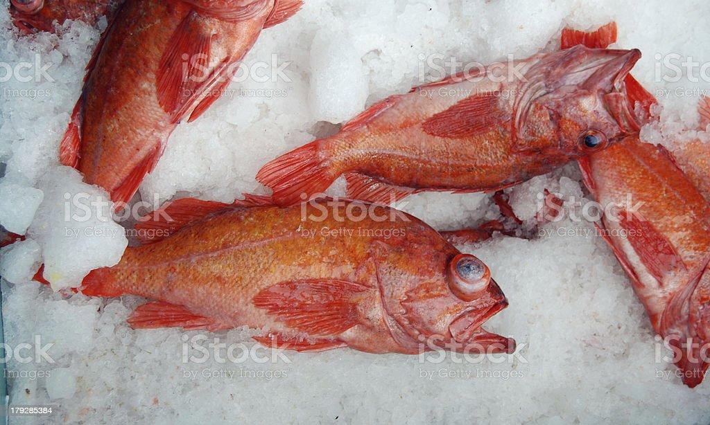 Rockfish stock photo