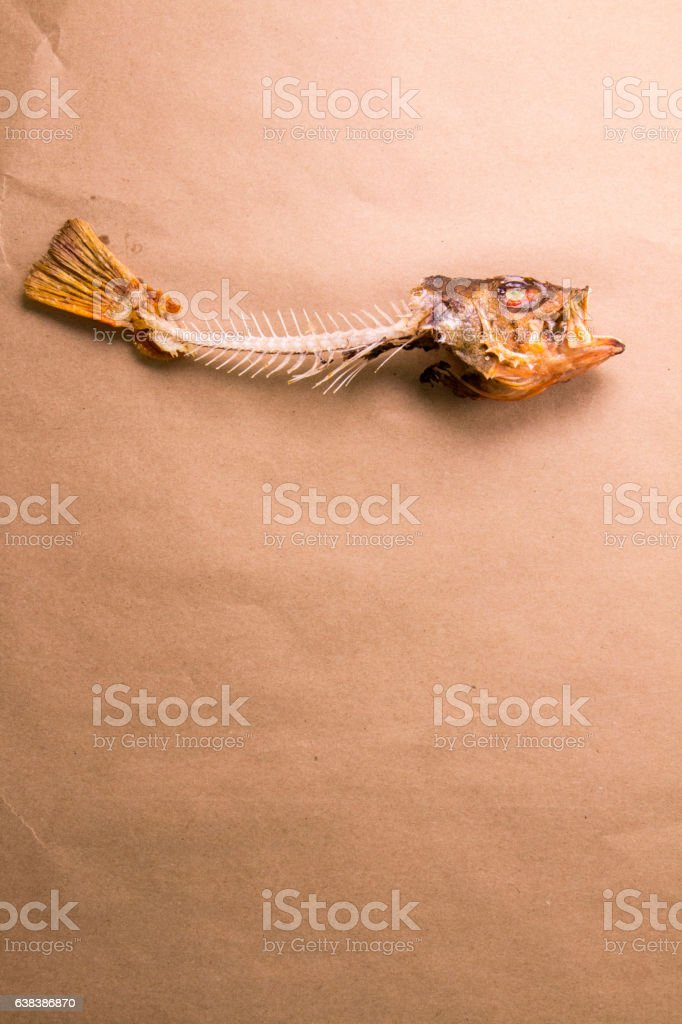 Rockfish Skeleton on Butcher Paper stock photo