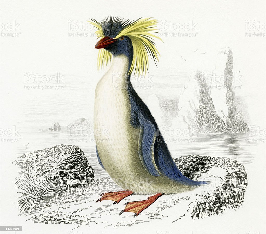 Rockhopper Penguin, historic Illustration, 1849 stock photo